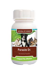Parasite Dr