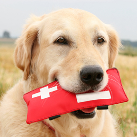 First Aid for your Pets