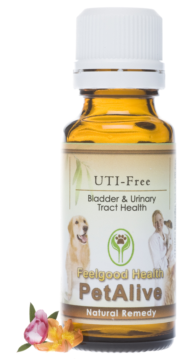 How To Naturally Treat Uti In Dogs